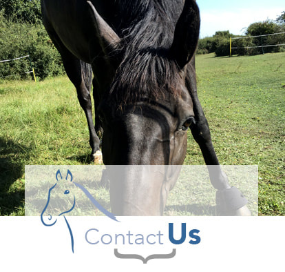 Contact John Dunsford Equine Clinic in Midhurst